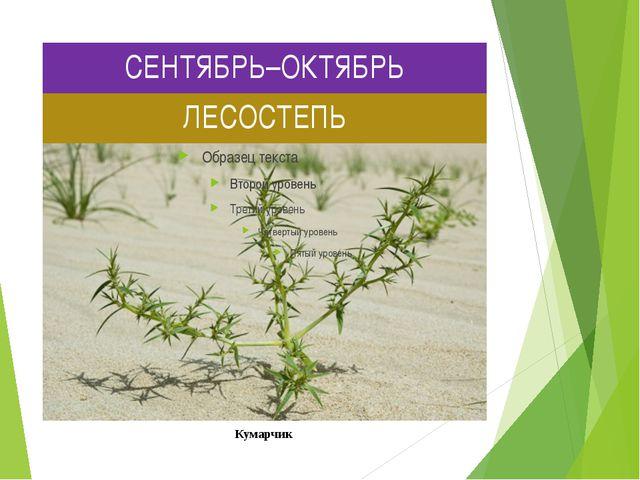 СЕНТЯБРЬ–ОКТЯБРЬ ЛЕСОСТЕПЬ Кумарчик Кумарчик или катун, также «киргизское пше...