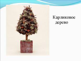 Карликовое дерево