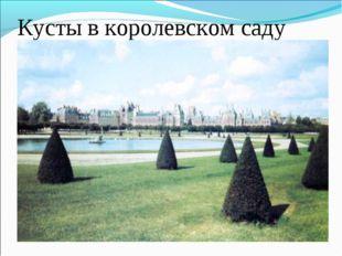 Кусты в королевском саду