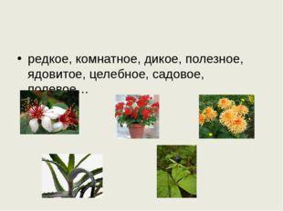 редкое, комнатное, дикое, полезное, ядовитое, целебное, садовое, полевое…