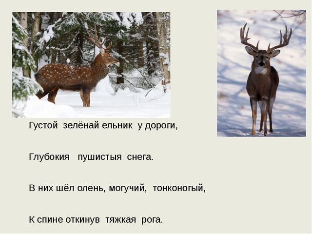 Густой зелёнай ельник у дороги, Глубокия пушистыя снега. В них шёл олень, мо...