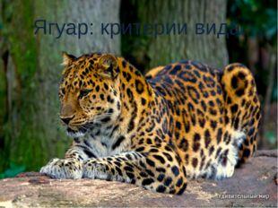 Ягуар: критерии вида.