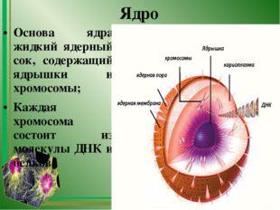 Ядро Основа ядра жидкий ядерный сок, содержащий ядрышки и хромосомы; Каждая х
