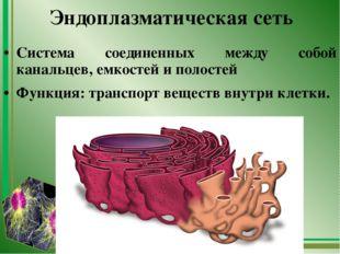 Эндоплазматическая сеть Система соединенных между собой канальцев, емкостей и