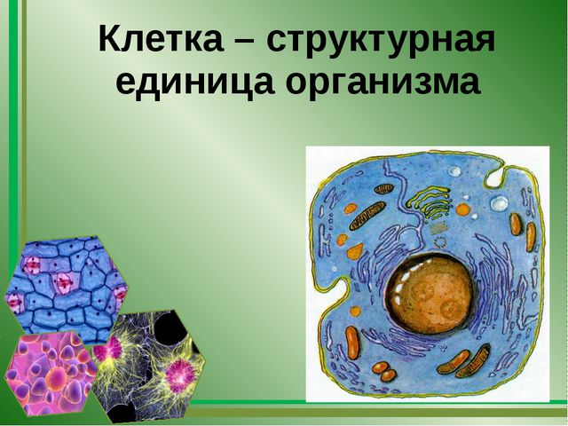 Клетка – структурная единица организма