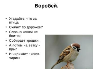 Воробей. Угадайте, что за птица Скачет по дорожке? Словно кошки не боится, Со