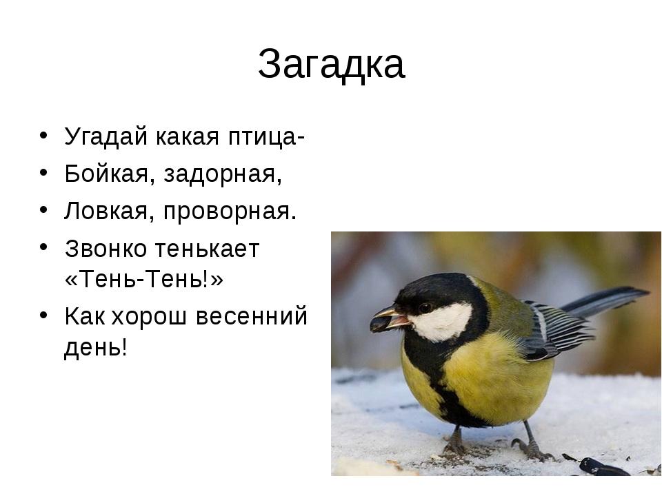 Загадка Угадай какая птица- Бойкая, задорная, Ловкая, проворная. Звонко теньк...