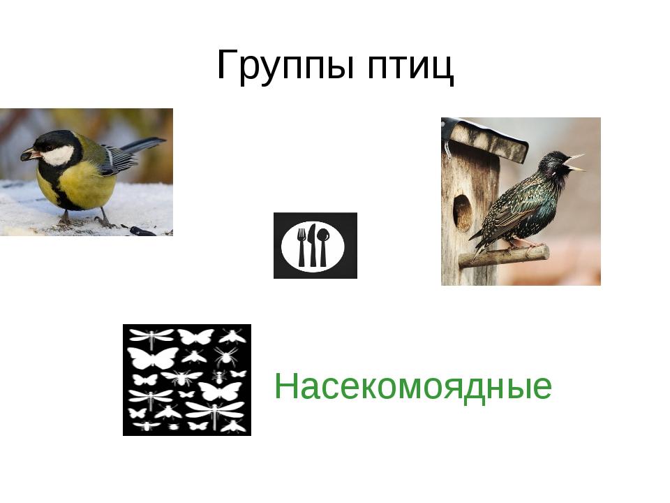 Группы птиц Насекомоядные