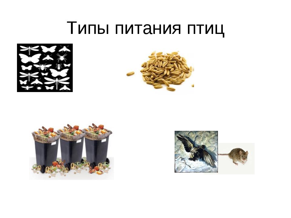 Типы питания птиц