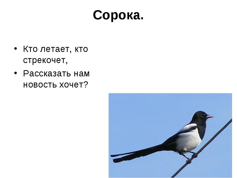 Сорока. Кто летает, кто стрекочет, Рассказать нам новость хочет?
