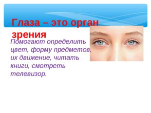 Глаза – это орган зрения Помогают определить цвет, форму предметов, их движен