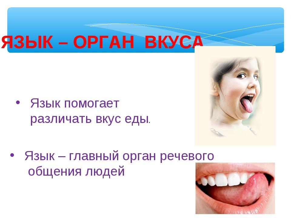 ЯЗЫК – ОРГАН ВКУСА Язык помогает различать вкус еды. Язык – главный орган реч...