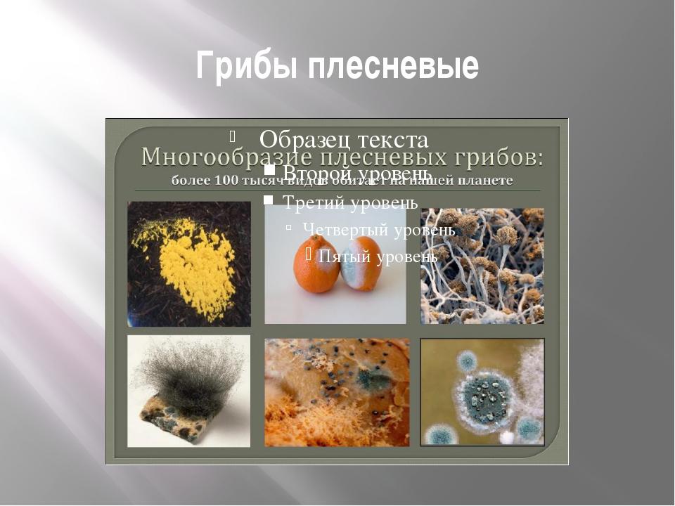 плесневые грибы картинки для презентации одно