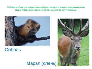 В Байкало-Ленском заповеднике обитает четыре основных типа животного мира: лу