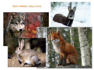 Волк, кабарга, заяц и лиса