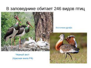 В заповеднике обитает 246 видов птиц Черный аист (Красная книга РФ) Восточная