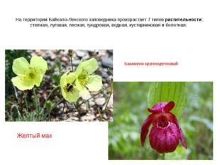 На территории Байкало-Ленского заповедника произрастает 7 типов растительност