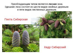 Преобладающим типом является лесная зона. Здешние леса состоят из шести видов