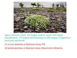Здесь обитает около 130 видов грибов, около 300 видов лишайников, 175 видов