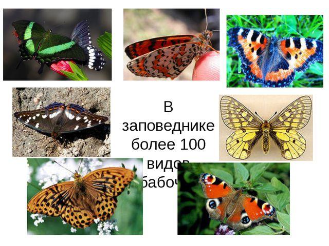 В заповеднике более 100 видов бабочек