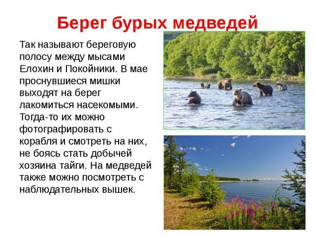 Берег бурых медведей Так называют береговую полосу между мысами Елохин и Поко...