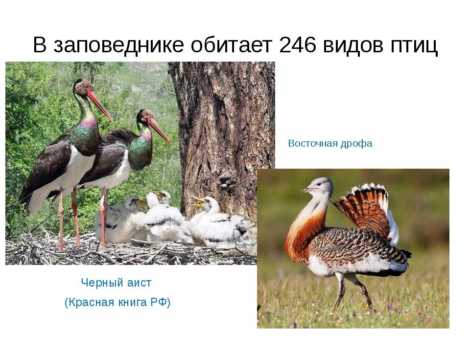 В заповеднике обитает 246 видов птиц Черный аист (Красная книга РФ) Восточная...