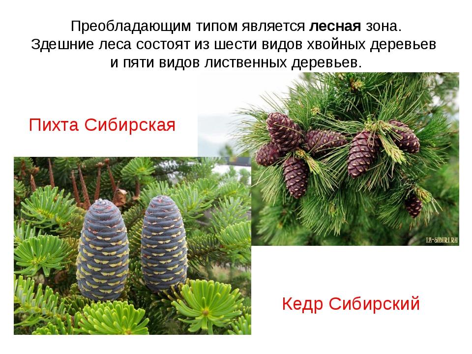 Преобладающим типом является лесная зона. Здешние леса состоят из шести видов...