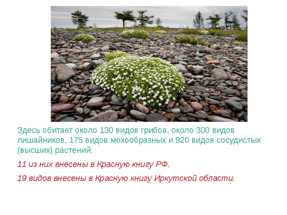 Здесь обитает около 130 видов грибов, около 300 видов лишайников, 175 видов...