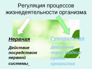 Регуляция процессов жизнедеятельности организма Нервная Действие посредством