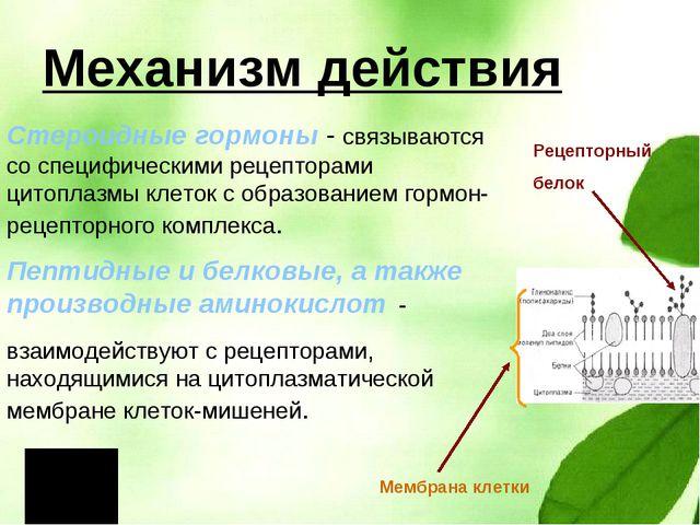 Механизм действия Стероидные гормоны - связываются со специфическими рецептор...