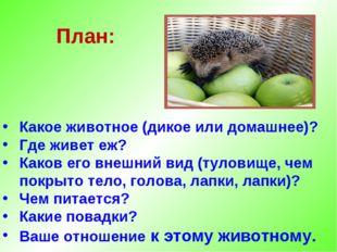 План: Какое животное (дикое или домашнее)? Где живет еж? Каков его внешний ви